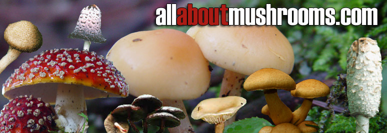 all about mushrooms - information about mushrooms - types of ...